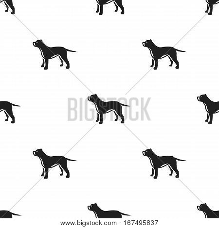 Pitbull vector illustration icon in black design