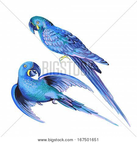 isolated editable vector parrot. set of two illustrtions of Hyacinth macaw, Lear's macaw, parakeets.