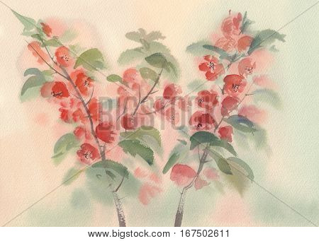Branch of Japanese blooming quince. Watercolor illustration. Red flower