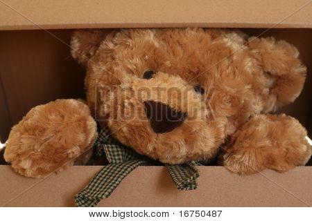 primeros planos de lindo oso de peluche en caja