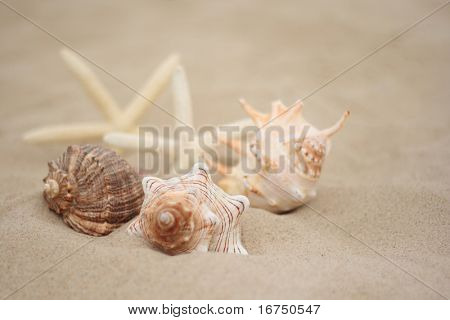 collection of shells on the beach - holiday time