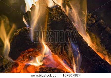 Flames dance on charred logs in a campfire.