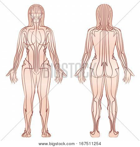 Meridians - meditating woman with main acupuncture meridians - front view, back view - Isolated vector illustration on white background.