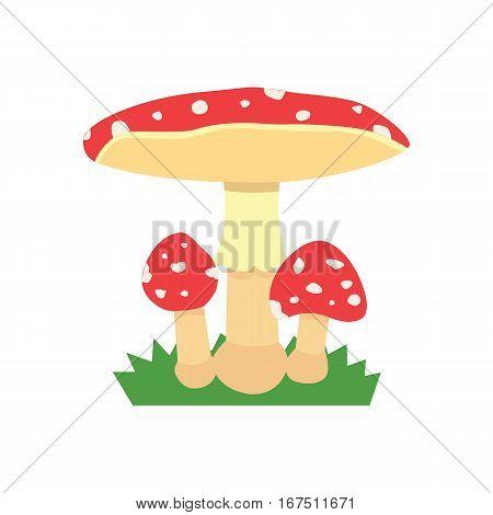 Amanita poisonous mushroom, isolated vector amanita on white background isolated