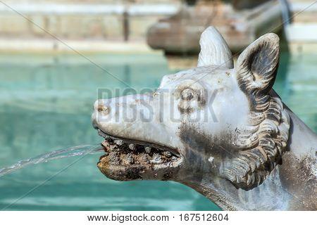 Wolf Spouting Water Fonte Gaia Siena