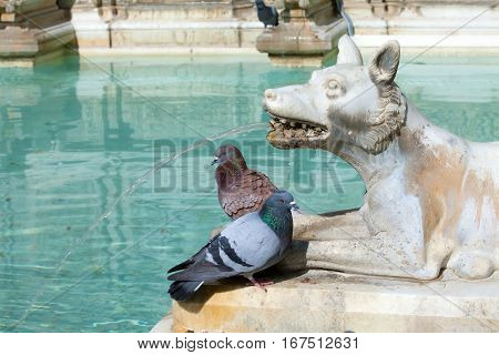 Wolf Statue With Pigeons