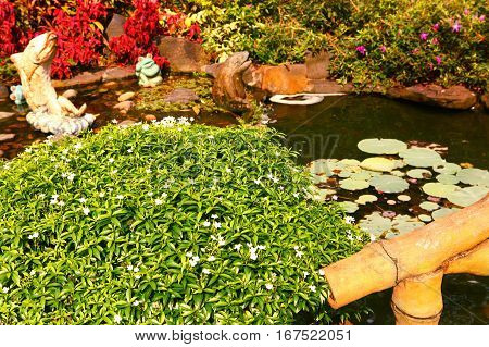 beautiful asian garden with water lily and breach