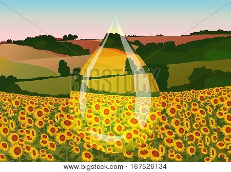 drop of sunflower oil on the background field with sunflowers