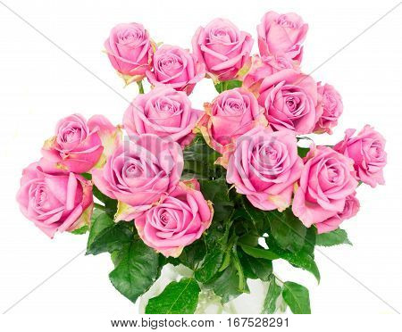 Violet blooming fresh roses posy isolated on white background