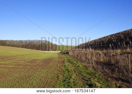 Tree Saplings And Wheat