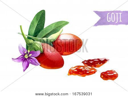 Watercolor illustration of goji berries isolated on white background with clipping path included