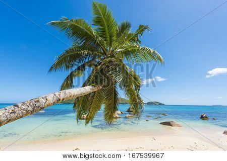 Beautiful beach Anse Boudin seen from under the coconut palm, Praslin island, Seychelles.
