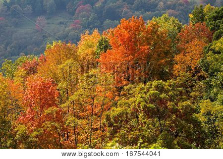 Red autumn fall leaves in West Virginia with shadowed hillside in distance