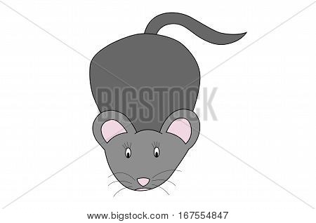illustration of little grey mouse on white background