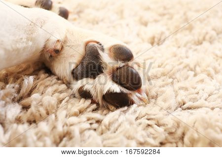 Macro Of White Dog Paw