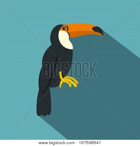 Toucan, ramphastos vitellinus icon. Flat illustration of toucan, ramphastos vitellinus vector icon for web on baby blue background