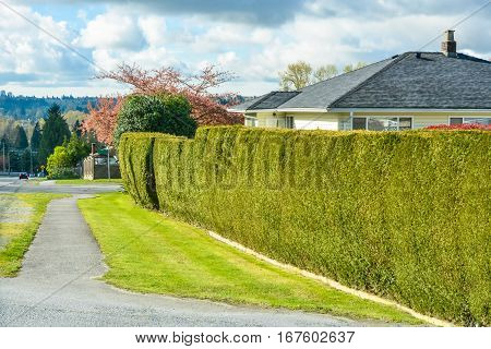 Asphalt pathway and green hedgerow along backyard of residential house