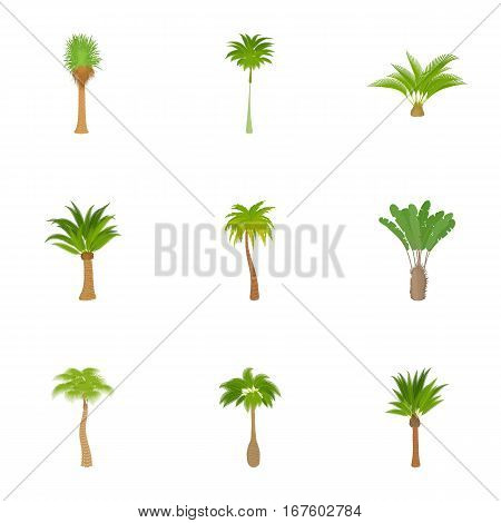 Types of palm icons set. Cartoon illustration of 9 types of palm vector icons for web