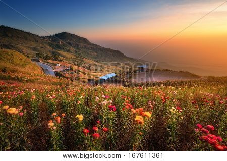 Beautiful view of Phu Tub Berk hill with flower field in morning in sun light in morning. Phu Hin Rong Kla National Park in Thailand.