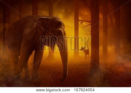 Elephant and some animal stuck in fires in forest