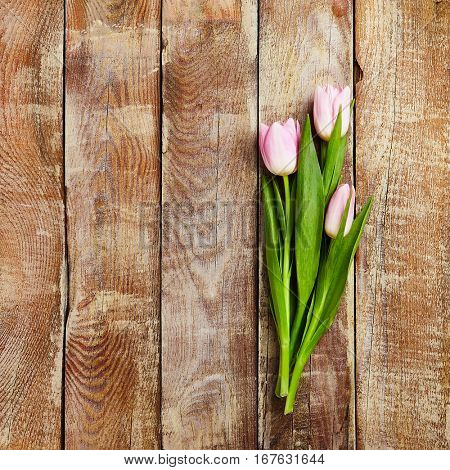 Creative Layout of Tulip on Wooden Board Background. Minimal Flower Concept. Top View. Flat Lay