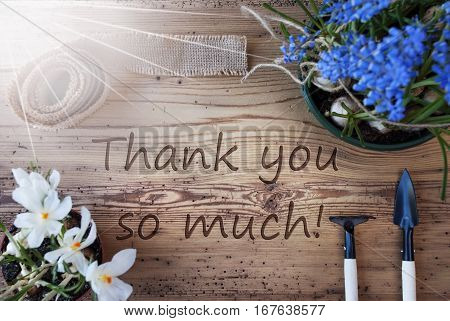 English Text Thank You So Much. Sunny Spring Flowers Like Grape Hyacinth And Crocus. Gardening Tools Like Rake And Shovel. Hemp Fabric Ribbon. Aged Wooden Background