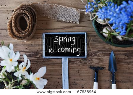 Sign With English Text Spring Is Coming. Spring Flowers Like Grape Hyacinth And Crocus. Gardening Tools Like Rake And Shovel. Hemp Fabric Ribbon. Aged Wooden Background