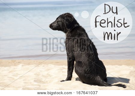 Speech Balloon With German Text Du Fehlst Mir Means I Miss You. Flat Coated Retriever Dog At Sandy Beach. Ocean And Water In The Background