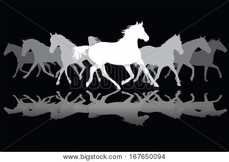 Trotting white and grey horses silhouette on black background vector illustration