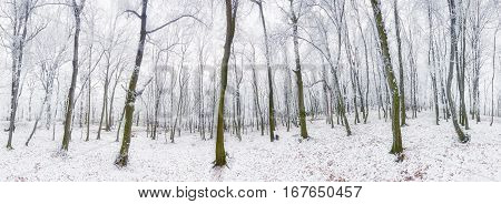 Panorama of Winter forest with snow and tree