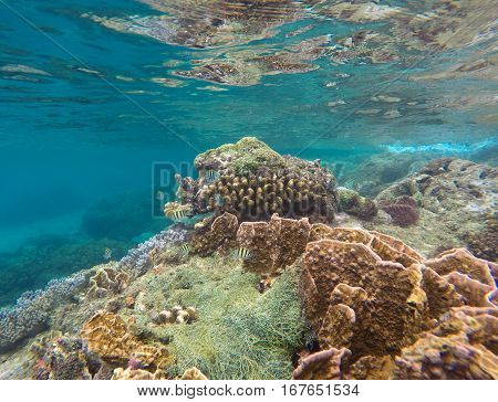 Underwater landscape View to coral reef Apo island Philippines. Tropical fishes in blue water. Exotic marine life. Snorkeling near tropic island Apo. Summer vacation activity - snorkeling in lagoon