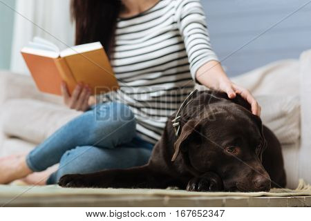 Always by my side. Attentive sweet graceful woman taking a break petting her loyal pet while reading an interesting book and sitting on the floor
