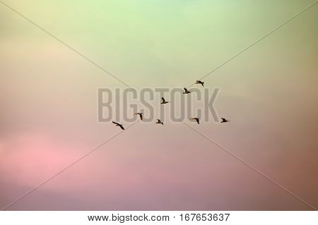 A flock of migratory birds lined up in a V formation before a long flight.