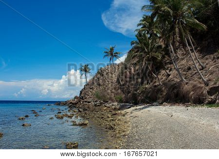 The beach with palm trees Apo island Philippines. Tropical island beach in summer sun. Vacation at the tropical island. Exotic place for holiday. Tropical beach with palms image. Empty sand beach
