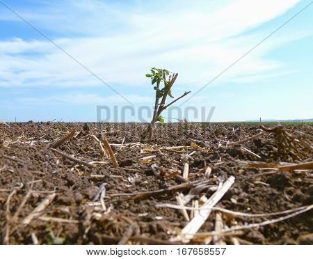 Photo of a green plant standing in the middle of a plowed field