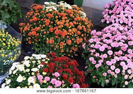 Beautiful colorful flowers in the market in Europe