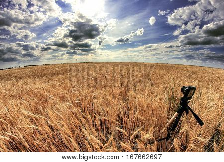 Shooting time-lapse with camera on tripod. Wheat field.