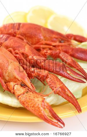 plate of crawfishes isolated on white - food and drink