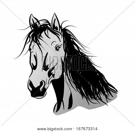 Illustration of light gray horse head with long mane