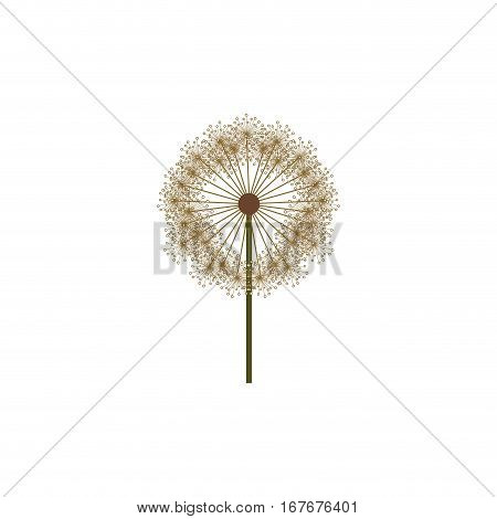 colorful dandelion with stem and pistil vector illustration