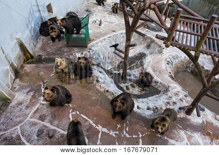 Brown bear together in zoo park