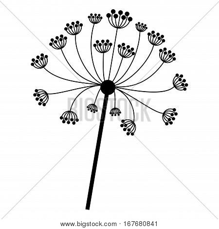 silhouette dandelion with stem and pistil closeup . Vector illustration