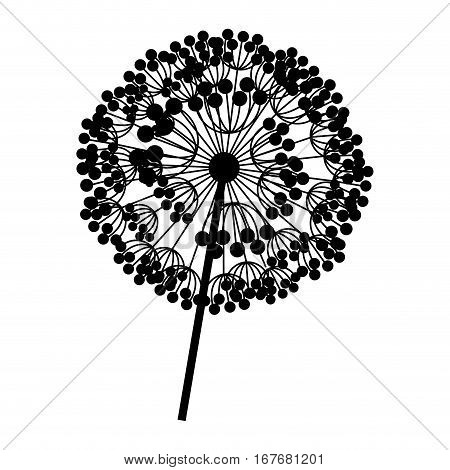 contour dandelion with stem and pistil closeup vector illustration