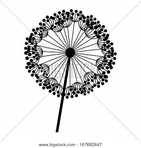 silhouette dandelion with stem and pistil closeup vector illustration