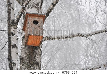 nesting box on the birch covered with hoarfrost in frosty winter day