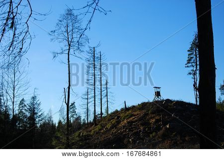 Hunting tower on a hill in a forest with dead trees