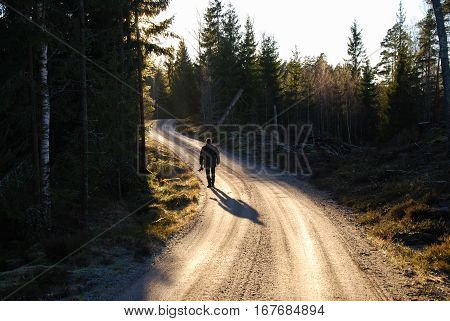 Man walks at a winding gravel road in a coniferous forest in the evening sun