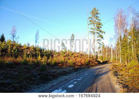Winding sunlit gravel road in the woods