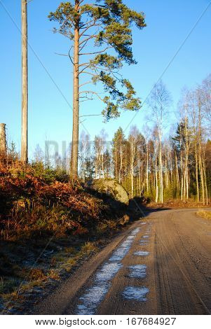 Winding gravel road into a sunlit forest