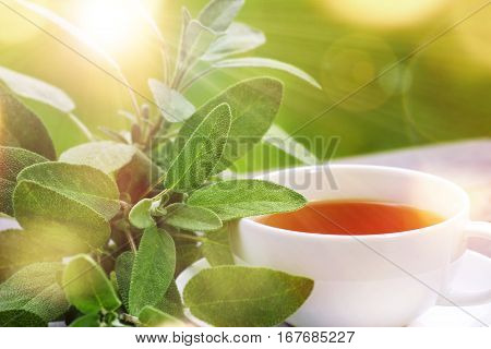 Sage tea with green leaves served on the terrace